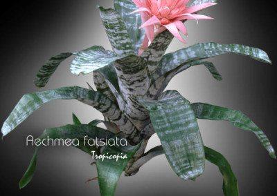 Blooming 24