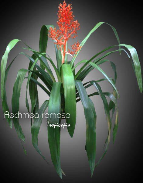 Blooming 23
