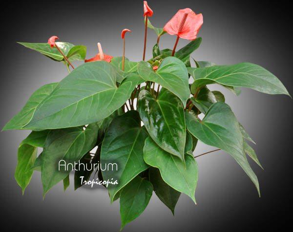 Blooming 20