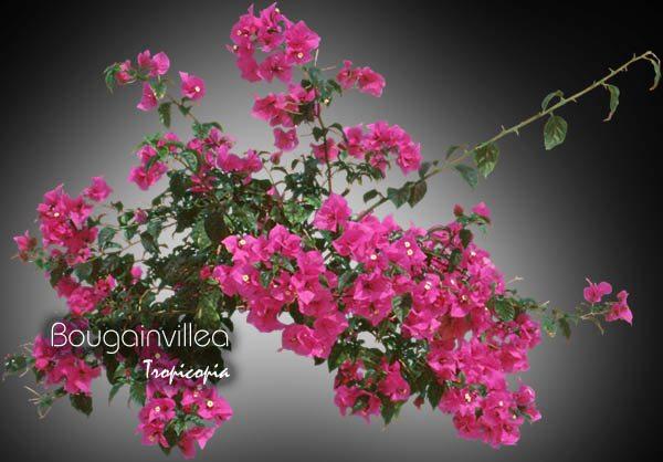 Blooming 16