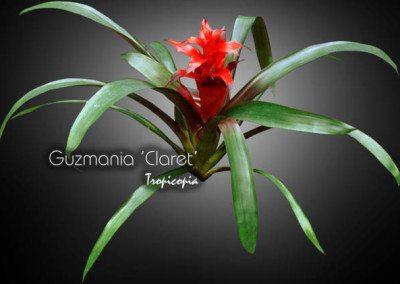 Blooming 13