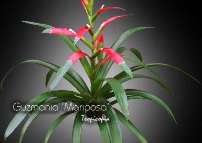 Blooming 11