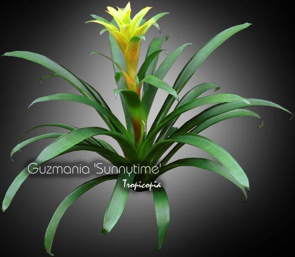Blooming 9