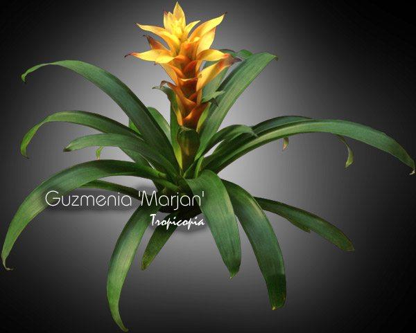 Blooming 8