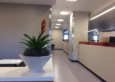 Office Plant Care