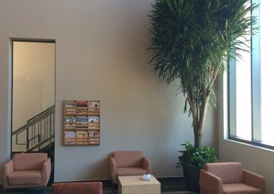 Indoor Plant Maintenance