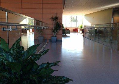 Office Plant Service