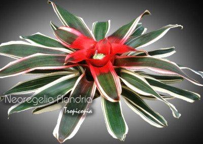 Blooming 6