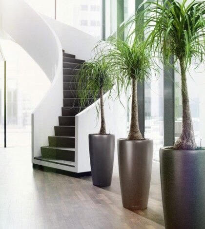 office and home indoor plant services and maintenance