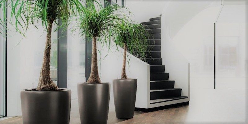 Attrayant Office Plant Service And Indoor Plant Care